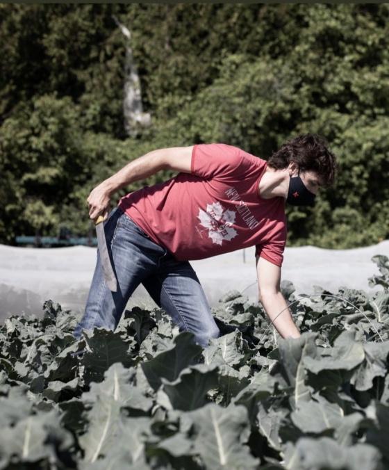 trudeau harvest