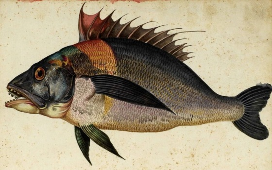 FISH 472