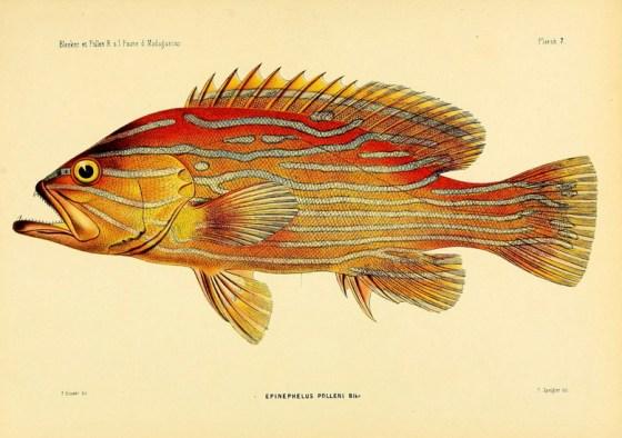 fish 788