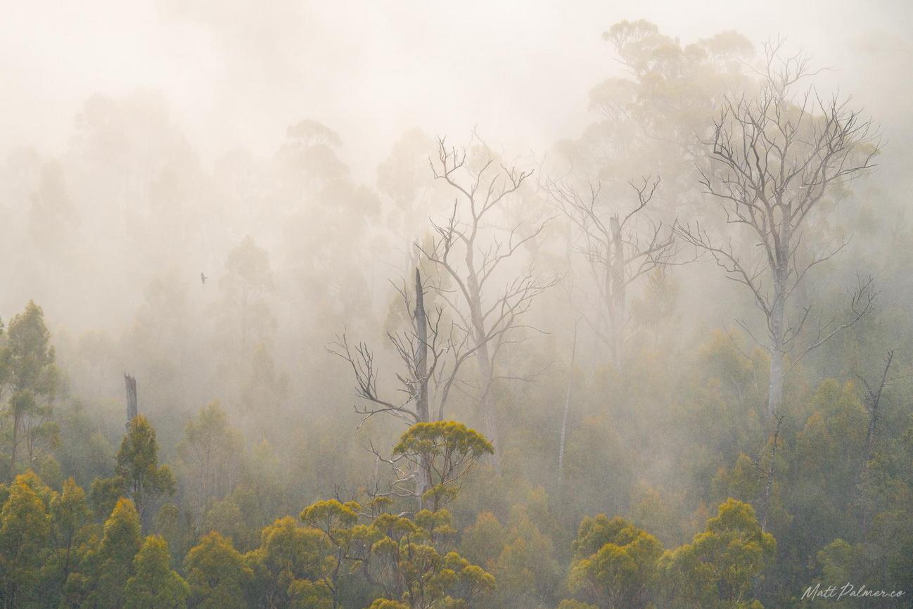 Misty forest, Tasmania
