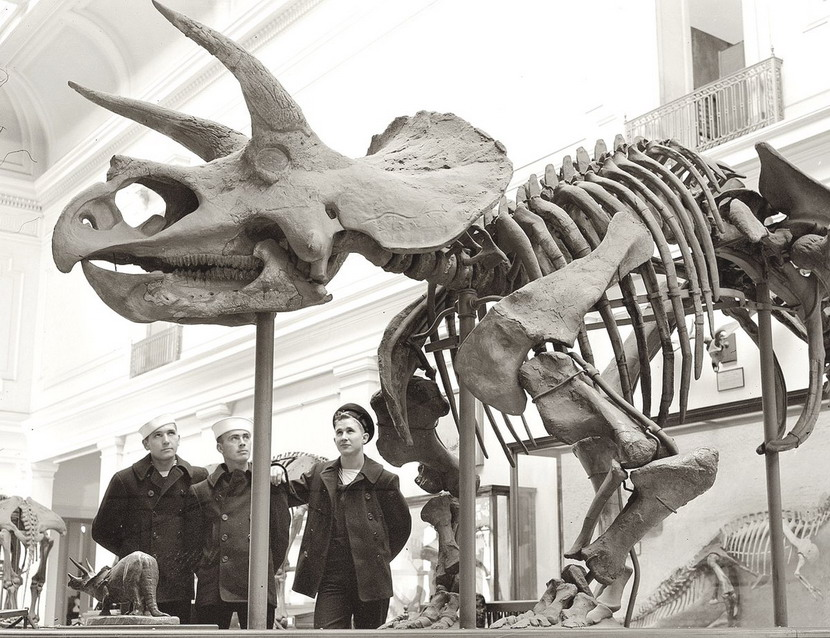 Sailors visiting the Natural History Museum,NYC