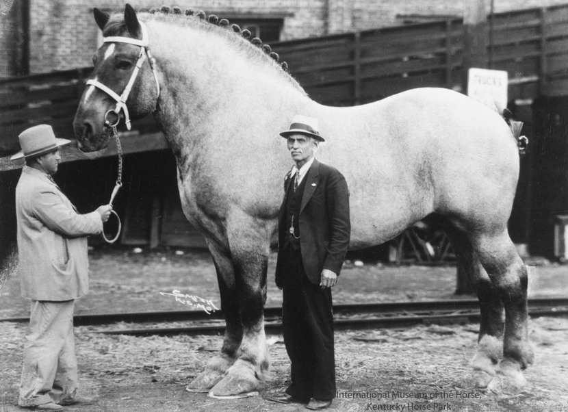 Big horse of yore