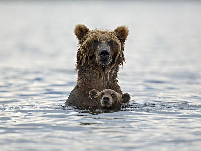 Wet Bears