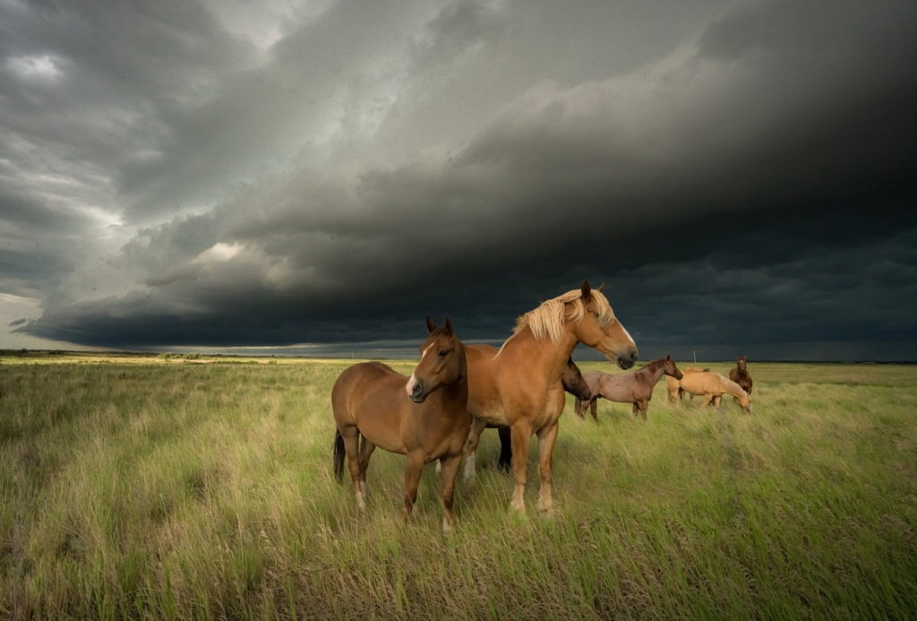 Storm clouds and horses