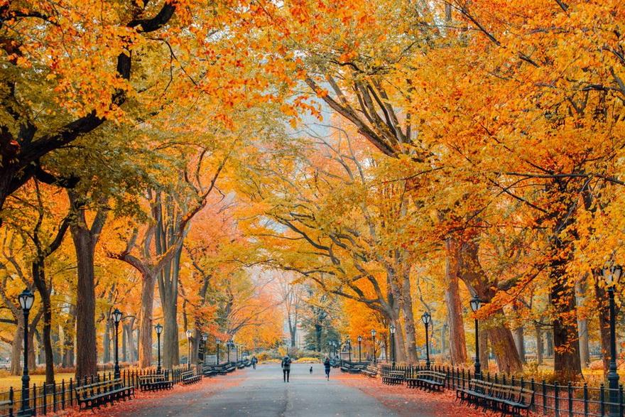 Autumn, NYC, 2020