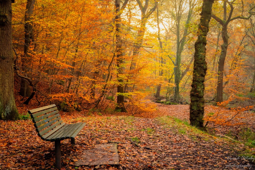 Autumn in England by DavidOxtaby