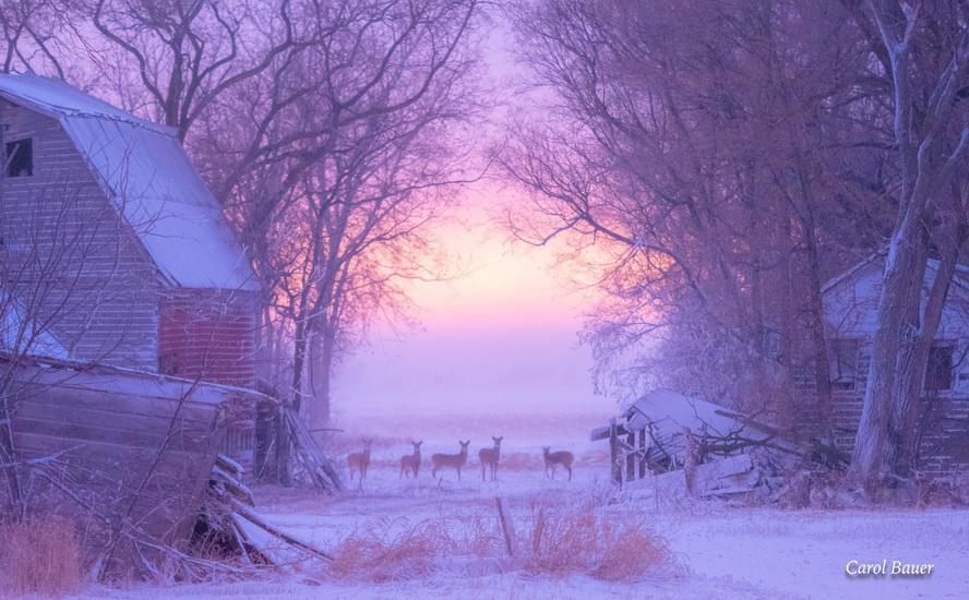 Minnesota in winter, photo by CarolBauer