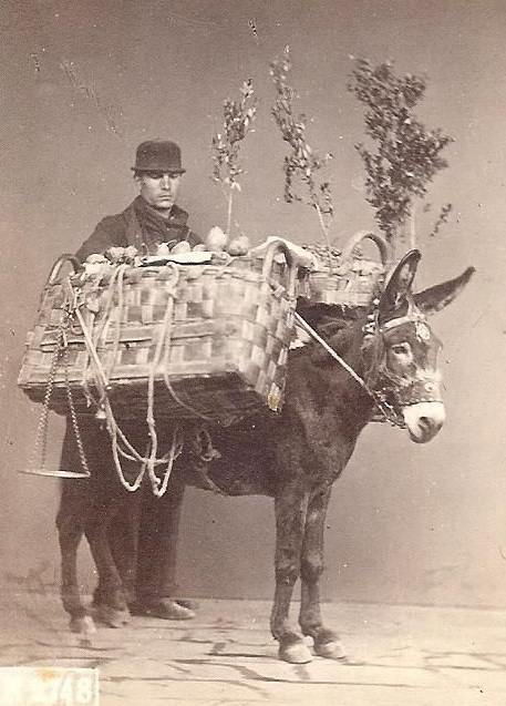 Time to load up the Christmasmule!