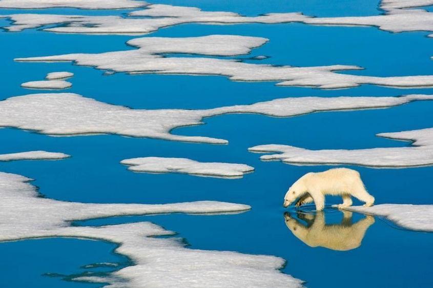 Polar Bear, photo by Ralph LeeHopkins.