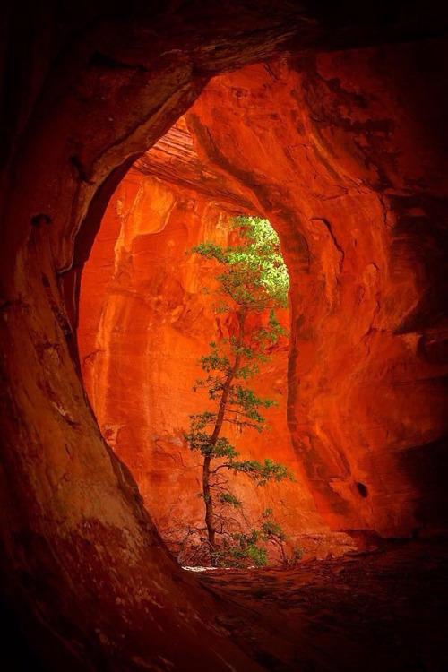 Tree growing in an orangecanyon