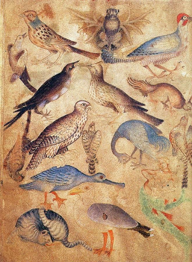 Bird illustrations, England,1400s
