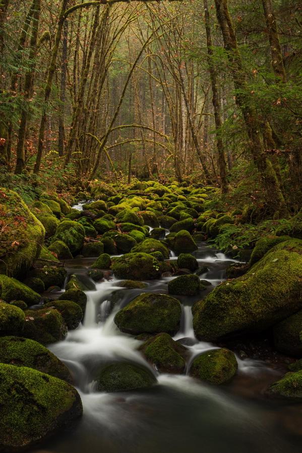 Mossy Stream inOregon