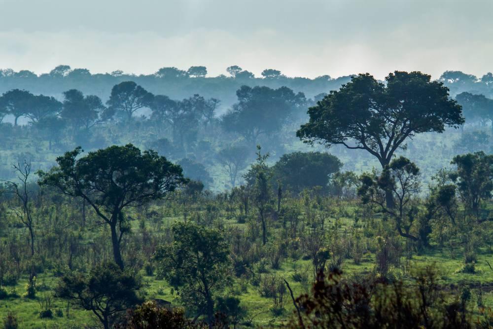 Misty savannah, Africa