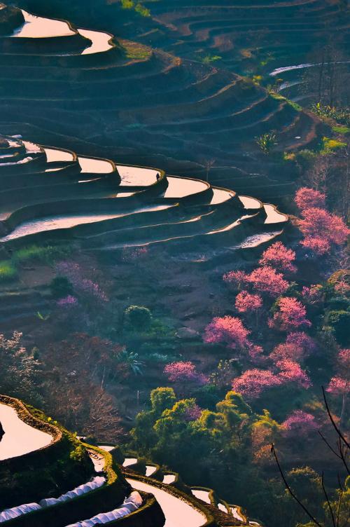 China in Springtime