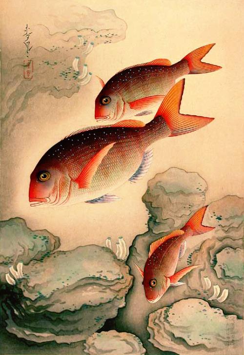 Fish by Japanese artist OhnoBakufu