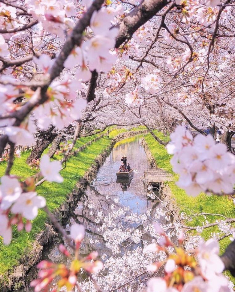 Spring time inJapan