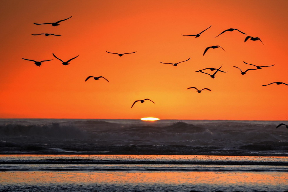 Sunset with seagulls, photo by KenGagne
