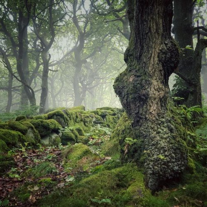 Misty forest, England