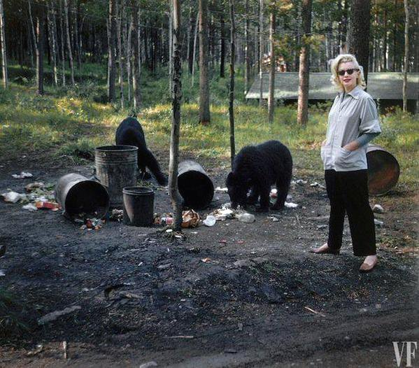 Funny picture of Marilyn Monroe on vacation in Canada, with bears feeding ontrash