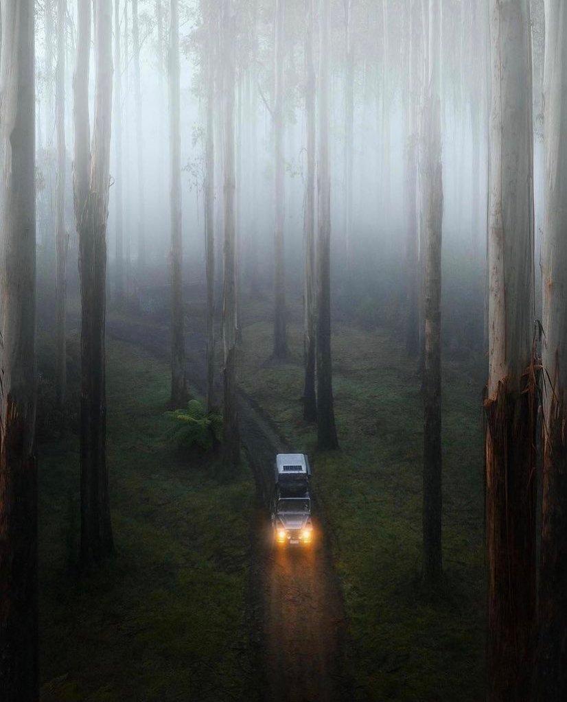 Misty forest inAustralia