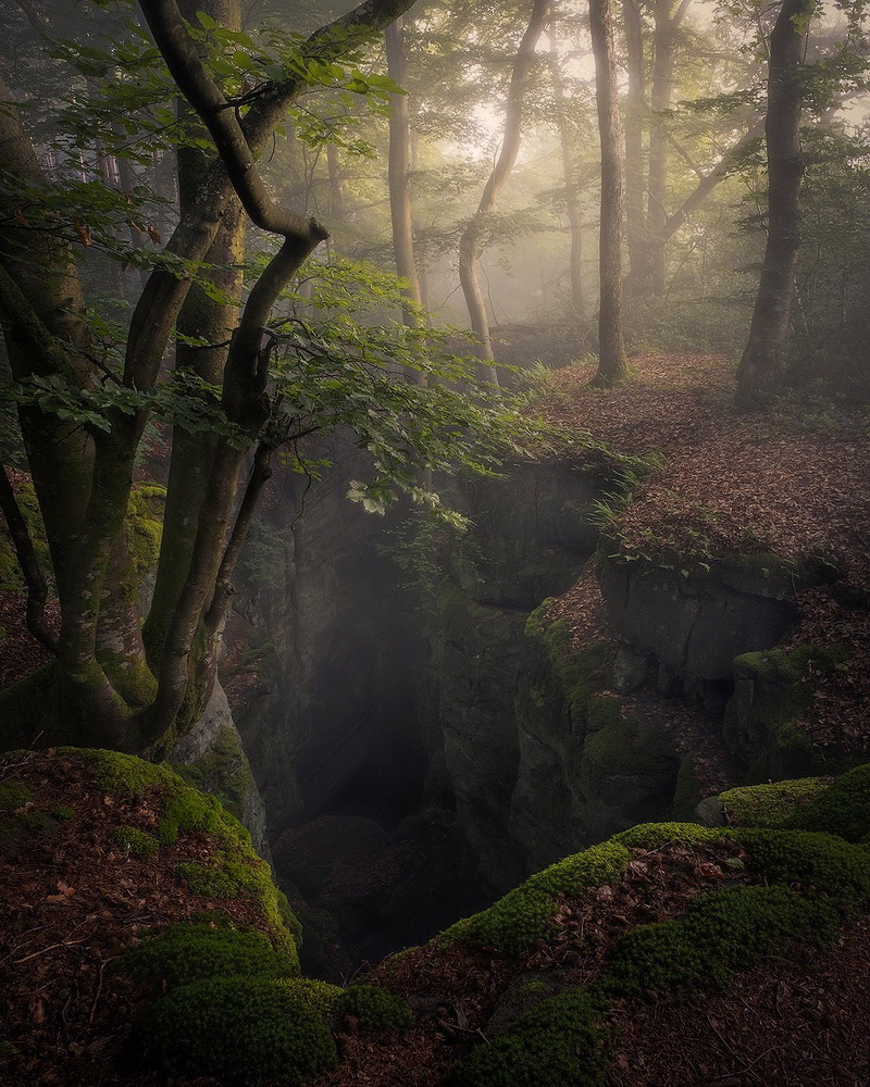 In the misty Black Forest,Germany