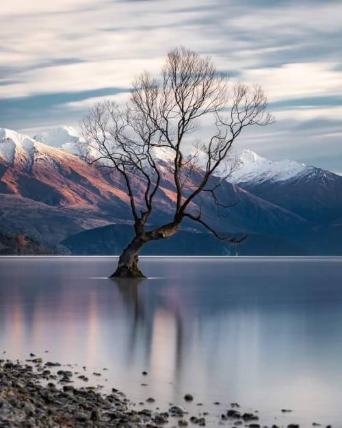 Lone tree, photo by AronJenkin