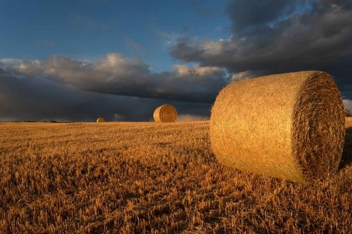 Hay rolls in Autumnlight