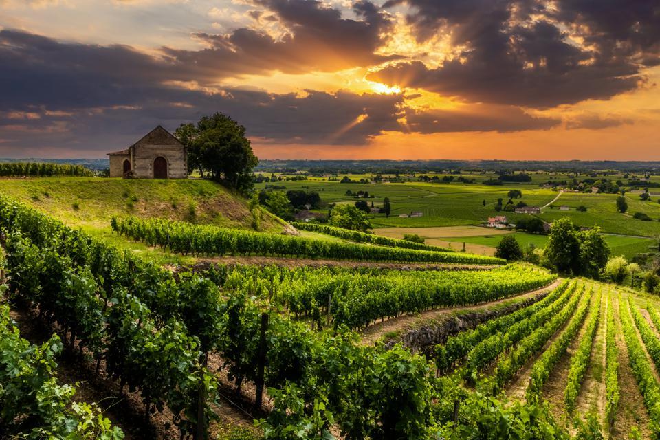 Vineyard near Bordeaux,France